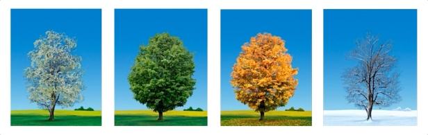 Four+Seasons+Trees+-+All+same+sizes+spaced+white